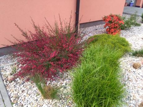 Ozdobne travy